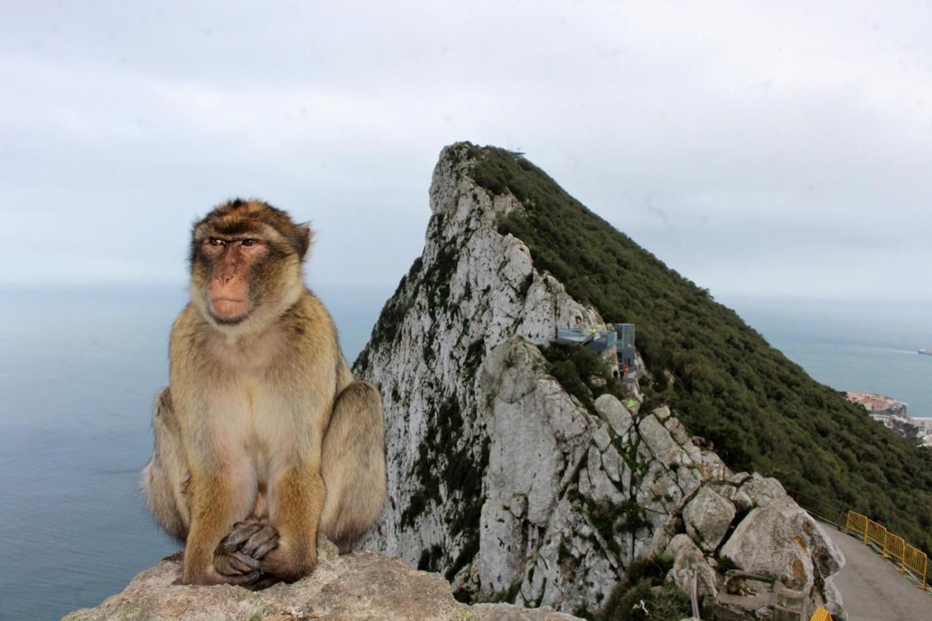 Los monos, un patrimonio de Gibraltar